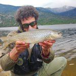 Trota fario in lago, cathc and release