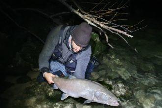 hucho hucho, big danube salmon, pietro invernizzi
